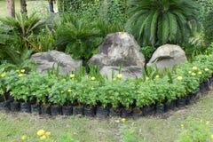сад малый Стоковое Изображение