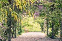 сад мирный стоковые фото