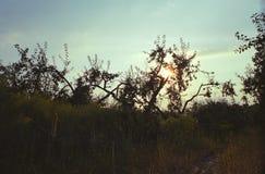 Сад одичалого яблока стоковое фото