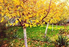 Сад осени Стоковые Изображения