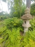 Сад папоротника стоковое фото rf
