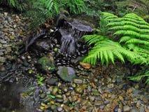 сад папоротника Стоковые Фотографии RF