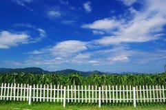 сад плодоовощ дракона Стоковое Фото
