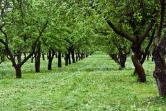 сад плодоовощ Стоковые Фотографии RF