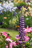 сад - разнообразие Стоковая Фотография RF