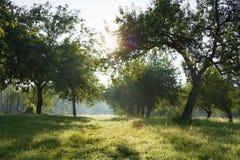 сад рассвета яблока Стоковые Изображения