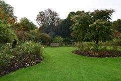 Сад роз осени Стоковое Изображение