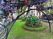 Сад роз Стоковая Фотография RF