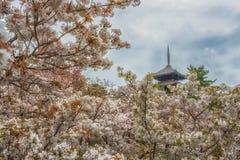 Сад Сакуры полного цветения с голубым небом и старой пагодой стоковое изображение
