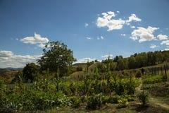 Сад сельской местности стоковые фото