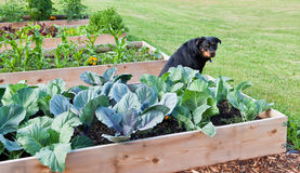 сад собаки Стоковая Фотография