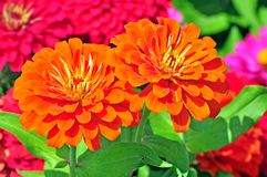Сад с пестроткаными цветками Стоковые Изображения