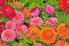 Сад с пестроткаными цветками Стоковое фото RF