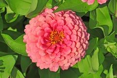 Сад с пестроткаными цветками Стоковое Изображение RF