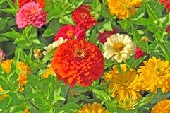 Сад с пестроткаными цветками Стоковые Фото
