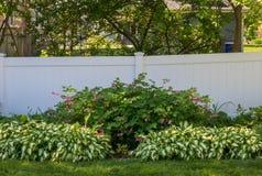 Сад тени с хостой и чутким человеком стоковая фотография rf