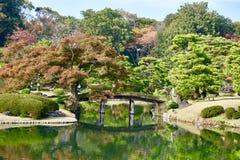 Сад Токио парка Rikugien японский стоковые фотографии rf