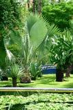 сад тропический стоковое фото rf