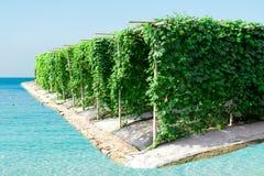 Сад тыквы аграрной фермы овоща горький для здоровья стоковое изображение rf