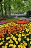 Сад тюльпана стоковые изображения rf