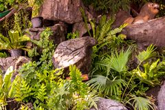 Сад украшенный с камнями и деревьями стоковая фотография rf