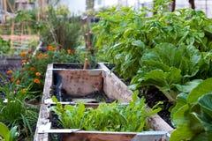 сад урбанский Стоковое Изображение RF