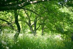 сад утра Стоковые Фотографии RF