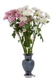 сад хризантемы Стоковое Изображение