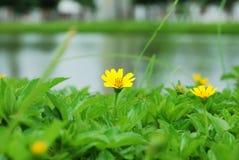 сад цветения стоковые фото