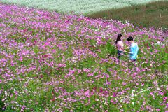 Сад цветет экологичность с много цветков красочных для того чтобы привлечь больше туристов, фотоснимок путешествует Стоковые Изображения