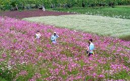 Сад цветет экологичность с много цветков красочных для того чтобы привлечь больше туристов, фотоснимок путешествует Стоковое фото RF