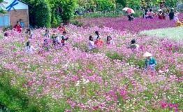 Сад цветет экологичность с много цветков красочных для того чтобы привлечь больше туристов, фотоснимок путешествует Стоковое Изображение RF