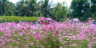 Сад цветет экологичность с много цветков красочных для того чтобы привлечь больше туристов, фотоснимок путешествует Стоковая Фотография RF