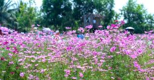 Сад цветет экологичность с много цветков красочных для того чтобы привлечь больше туристов, фотоснимок путешествует Стоковое Изображение