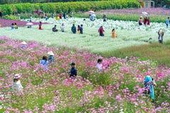 Сад цветет экологичность с много цветков красочных для того чтобы привлечь больше туристов, фотоснимок путешествует Стоковая Фотография