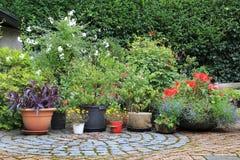 Сад цветка контейнера Стоковые Изображения