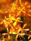 сад цветка 12 Стоковые Фото