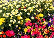 сад цветка стоковые фото