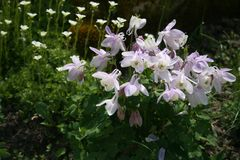 сад цветков лезвия предпосылки красивейший стоковая фотография