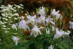 сад цветков лезвия предпосылки красивейший Стоковые Изображения