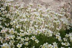 сад цветков лезвия предпосылки красивейший Стоковое фото RF