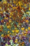 сад цветков предпосылки Стоковое Фото