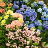 Сад цветков сада семьи дома Стоковое Изображение RF
