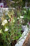 сад цветков Стоковые Изображения RF