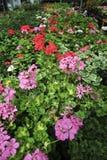 сад центра Стоковая Фотография RF