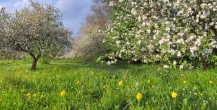 сад яблока Стоковые Изображения