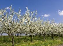 сад яблока 2 Стоковая Фотография RF