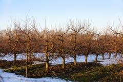 сад Яблок-дерева Стоковое Фото
