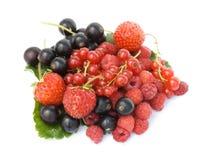 сад ягод зрелый стоковая фотография