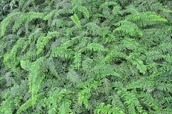 сад 010 Стоковые Изображения RF